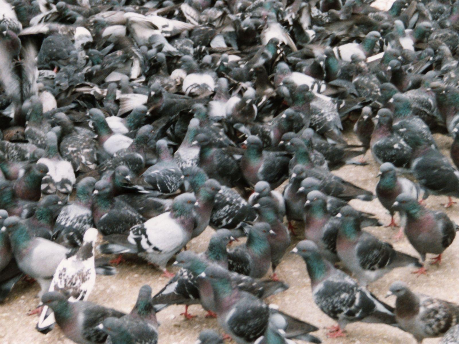 Les Pigeons entrepreneur Projet de lois de finances 2013 Start-up débat