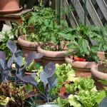 kitchen-garden-255404_960_720